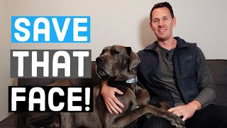How to TREAT Great Dane Acne + Tips for Preventing It!   Great Dane Care
