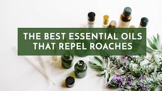 The Best Essential Oils that Repel Roaches