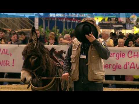 Voir la vidéo : Carrière Équine du 27 février 2017, partie 3