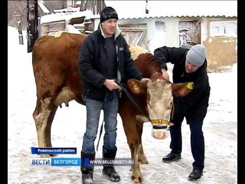 ГТРК Белгород - Корова  от Деда Мороза