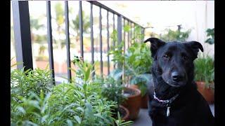 My Edible Garden Tour  2020 |Small Space Apartment Balcony Edible Garden - Container Urban Gardening