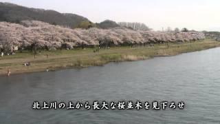 【HD】岩手県 北上展勝地 – がんばれ東北!