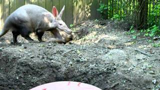 Sunday at the zoo with Mr. Aardvark