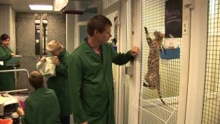 preview picture of video 'Welcome to The Heathrow Animal Reception Centre'