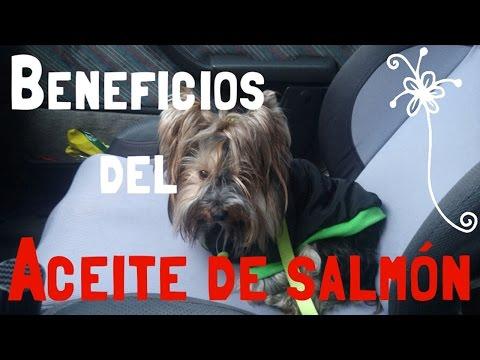 Beneficios del aceite de salmón para mascotas | SALUD ANIMALES