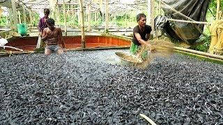 catfish farming - TH-Clip