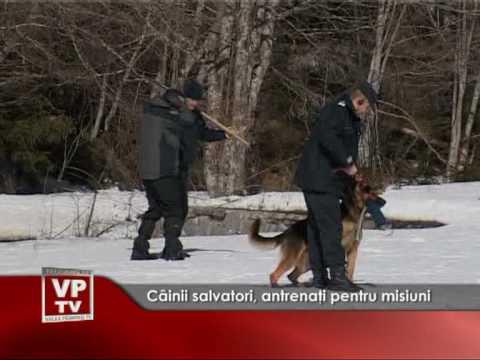 Câinii salvatori, antrenaţi pentru misiuni