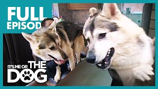The Wannabee Wolves: Molly and Alfie | Full Episode | It's Me or the Dog