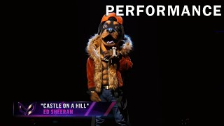 """Rottweiler sings """"Castle On A Hill"""" by Ed Sheeran 