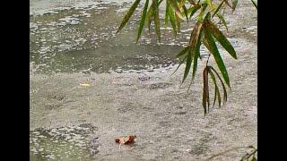 Ambientalista denuncia descaso da Copasa com Córrego da Cadeia e Companhia de Abastecimento se defende.