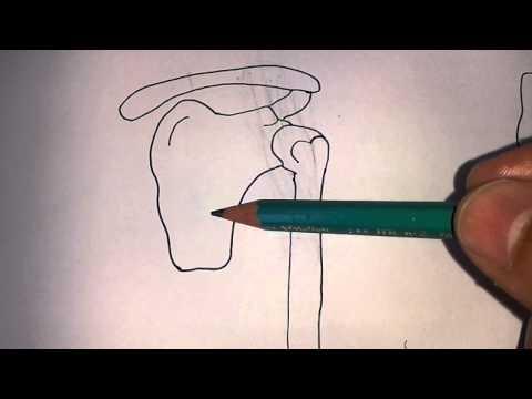 Qué ejercicios a una curvatura de la columna cervical
