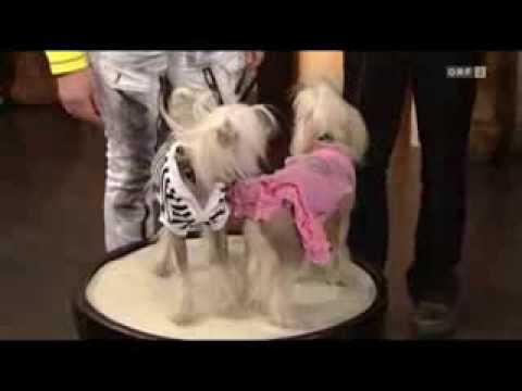 DoggyDolly Hundebekleidung Österreich