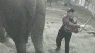 Italien forbyder dyr i cirkus