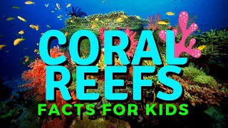 Coral Reef For Kids | Exploring The Coral Reef