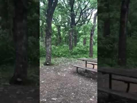 Cart in 5