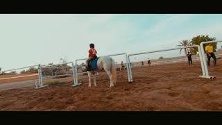 Horse fpv اللجام للفروسية