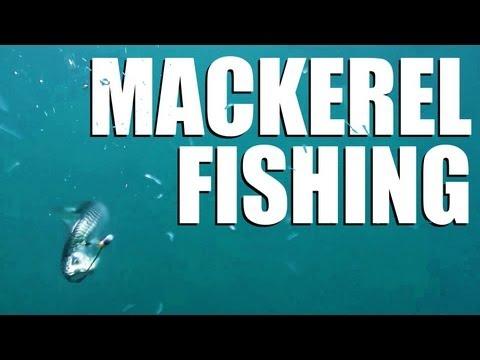 Mackerel fishing off the English south coast – perfect holiday fun
