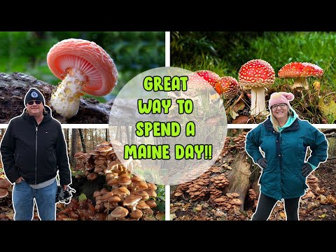 , title : 'Mushroom Foraging In Maine | Local Mushroom Course | Off The Beaten Path Things To Do In Maine!