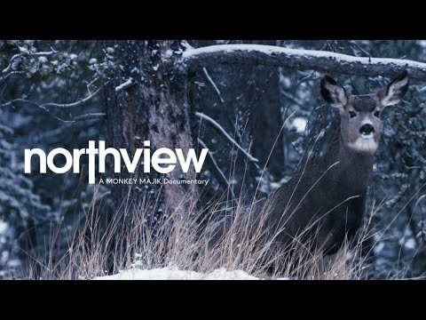MONKEY MAJIK - northview : A MONKEY MAJIK Documentary 【Digest Edition】