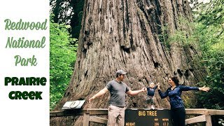Redwood National Park | Prairie Creek VLOG | The Tallest Trees