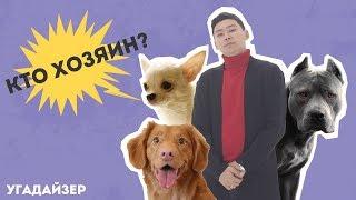 Калибеков Медет и Уразиманов Куаныш угадывают хозяев собак |  ШОУ УГАДАЙЗЕР