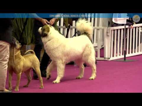 Voir la vidéo : Ring Canins du 27 février 2017, partie 3