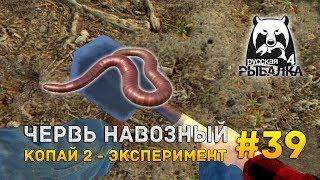Русская рыбалка 4 #39 - Червь навозный. Копай 2 - эксперимент