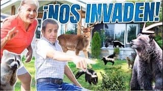 NUESTRA CASA SE LLENA DE ANIMALES SALVAJES   LOS POLINESIOS VLOGS