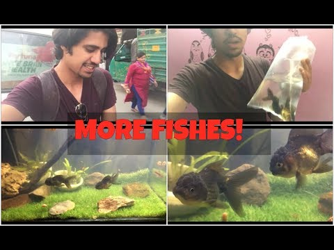GETTING NEW FISH? YAY! How to put fish in aquarium | Wildly Indian
