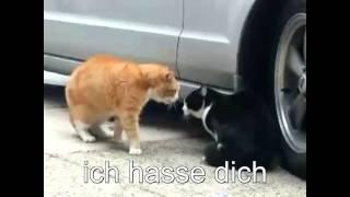 Sprechende Katzen - Deutscher Untertitel