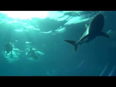 Seidenhaie im Sudan, Safari tiefer Süden,Sudan