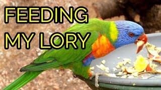 WHAT DO I FEED MY LORIKEET? - Feed My Pet Friday