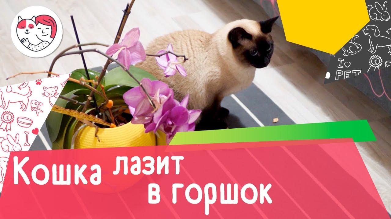 Как отучить кошку лазить в цветочные горшки: 5 советов