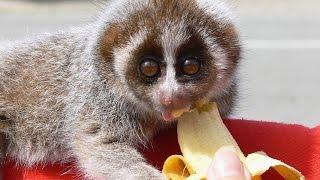 Смешные домашние экзотические животные!Интересное видео!
