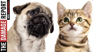 America's Newest Shortage: Cats & Dogs?