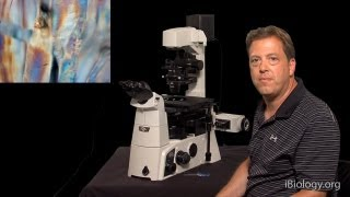 Microscopy: Phase, Polarization, and DIC (Stephen Ross)