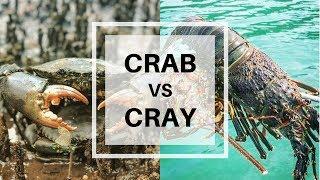 Mudcrab vs Crayfish Catch and Cook