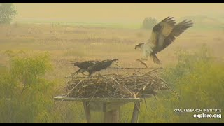 1st Fish of the Day - Charlo Osprey Nest 2020 09 16