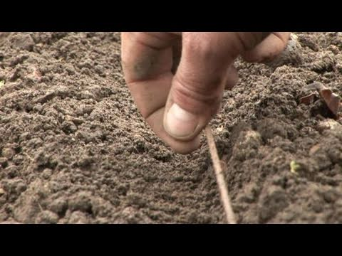 , title : 'How To Learn Planting Cabbages