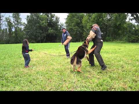 N1ña de 5 añ0s y su perro protector