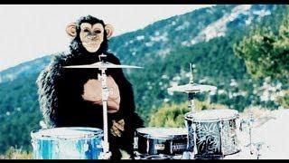 Deivhook - Coldplay - Paradise [Parody] ('Monkey'Drum Cover)