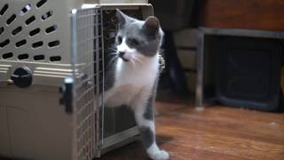 Bringing A New Cat Home (How To Introduce A New Cat To Your Current Cat)