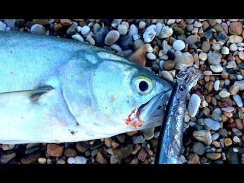 Shimano una causa per pesca