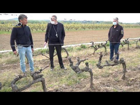 Gel dans la Drôme, l'évêque de Valence rencontre les cultivateurs