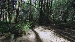 Oregon Coast Cinematic DJI FPV Quosatana Creek Myrtlewood Grove