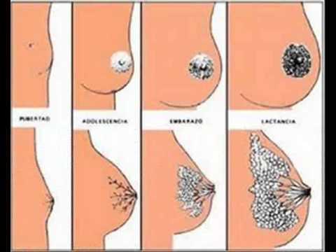 Que es necesario saber ante plastikoy los pechos