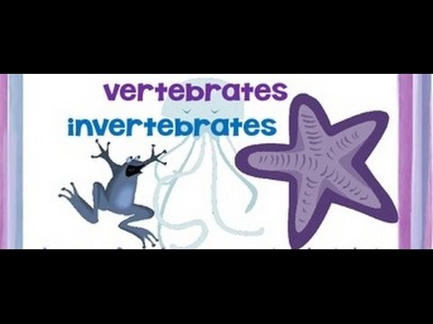 Vertebrates and Invertebrates animals - Video for kids