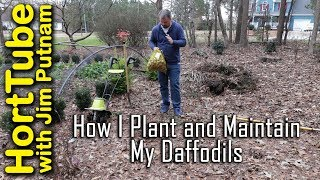 How I Plant and Maintain Daffodil Bulbs (Narcissus)💐