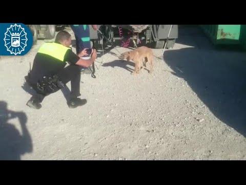 Capturado uno de los perros que atacaron a un hombre en Málaga