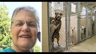 Download Youtube: Woman asks shelter for oldest, hardest to adopt dog that no one wants. Here's who they gave her